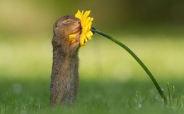 Chú sóc nhỏ ôm trọn hoa cúc vàng - khoảnh khắc trong sáng khiến dân mạng quên đi mọi căng thẳng và bực dọc
