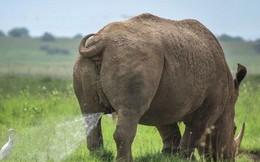 Những bức ảnh siêu hài hước trong chung kết cuộc thi nhiếp ảnh động vật hoang dã Comedy