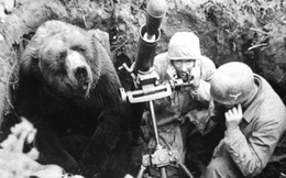 Cuộc đời kì lạ của binh nhì gấu Wojtek: Sống và chiến đấu như người lính thực thụ rồi trở thành anh hùng đáng tự hào của người Ba Lan