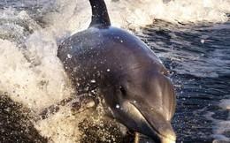 Bi kịch của cá heo châu Âu: Môi trường sống là một mớ hổ lốn toàn chất ô nhiễm, nồng độ thủy ngân cao kỷ lục