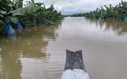 Thêm một cái 'hạn' chưa từng có HAGL Agrico (HNG): 1.500 ha trái cây sắp thu hoạch tại Lào đang bị ngập lụt nặng nề