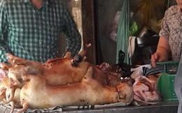 Bỏ ăn thịt chó từ khi thấy chó chảy nước mắt