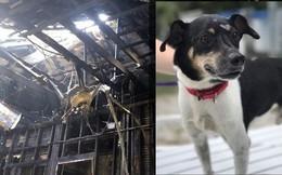 Chú chó dũng cảm hy sinh tính mạng để đổi lấy sự sống cho cả gia đình chủ trong cơn hỏa hoạn giữa đêm
