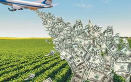 Những người nông dân và ván bài 28 tỷ USD có ý nghĩa quan trọng với ông Trump trong cuộc bầu cử sắp tới