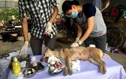 """Vụ phá đường dây trộm chó """"khủng"""": Hỗ trợ chữa trị vết thương cho đàn chó"""