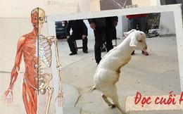 Đọc cuối tuần: Từ một con dê khuyết tật cho đến những bí ẩn trong bộ xương người