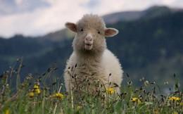 Chúng ta đang bị Facebook, Google biến thành những chú 'cừu non' như thế nào?
