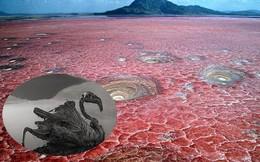 Bí ẩn về hồ nước tử thần khiến động vật 'hóa đá' khi rơi xuống