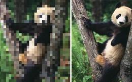 21 bức ảnh động vật hoang dã bị làm mờ: Tưởng ảnh hỏng nhưng lại mang thông điệp ý nghĩa phía sau khiến chúng ta phải bất ngờ