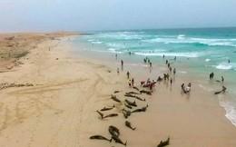 Cảnh tượng kinh hoàng: 136 cá heo bị mắc kẹt, chết thảm trên bờ biển Tây Phi