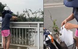 """Người phụ nữ ngang nhiên bứng trộm cây cảnh ở Phú Mỹ Hưng, bị nhắc nhở còn cố chấp: """"Em chỉ xin 1, 2 cây thôi mà"""""""