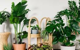 Gợi ý 8 loại cây cảnh thanh lọc không khí tốt, thích hợp để làm giảm ô nhiễm trong nhà