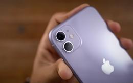 Thầy đồng về Apple dự báo: nhu cầu mạnh mẽ từ iPhone 11 và iPhone SE 2 sẽ giúp doanh số iPhone tăng đến 10% trong quý đầu năm sau