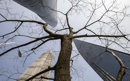 Khủng hoảng đang 'nảy mầm' trong góc tăm tối nhất của hệ thống ngân hàng Trung Quốc