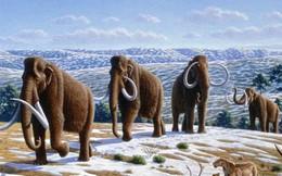Tiết lộ mới: Cá thể voi ma mút cuối cùng chỉ chết cách đây 4.000 năm
