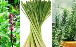 Mách bạn 10 loại cây cảnh trồng quanh nhà có khả năng xua đuổi kiến ba khoang hiệu quả