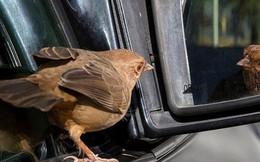 """Hỏi: """"Chim bay trong xe có làm trọng lượng của xe thay đổi?"""", câu trả lời thấu đáo của ứng viên khiến người phỏng vấn mời ở lại ký hợp đồng luôn"""