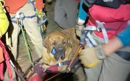 Chú chó nặng 86kg được nhân viên cứu hộ khiêng xuống núi vì xụi lơ không bước nổi