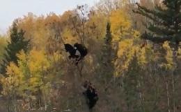 Video: Gấu mẹ trèo cây động viên các con vượt qua nỗi sợ hãi