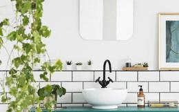 13 loại cây hoàn hảo để trong phòng tắm vì có khả năng thích ứng ở môi trường ẩm rất tốt