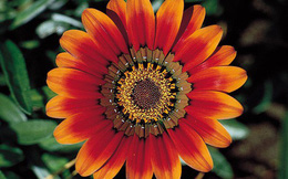 Bông hoa rực rỡ sắc màu tiết lộ điều tốt đẹp nào đang chuẩn bị ập đến cuộc sống của bạn?