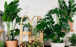 Ô nhiễm không khí đáng báo động, đây là 6 loại cây làm sạch không khí nhất định phải có trong nhà