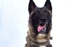 Tại sao danh tính chú chó quân đội bị thương trong chiến dịch tiêu diệt trùm khủng bố IS không thể bị tiết lộ?
