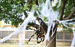 Thói quen dùng mạng nhện giả trang trí mùa Halloween: Siêu rẻ và ma mị, nhưng lại là một thảm họa sinh thái thực sự