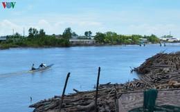 Cách chức nguyên Giám đốc Vườn Quốc gia Mũi Cà Mau
