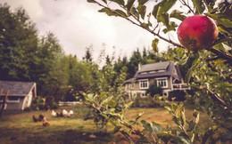 Khu vườn rau quả sạch bạt ngàn trên đảo của người đàn ông dành tất cả niềm đam mê cho trồng trọt