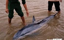 3 tiếng đồng hồ 'hộ tống' chú cá heo mắc cạn ra biển Cửa Đại