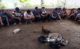 Vĩnh Long: Bắt quả tang nhóm đối tượng vào biệt thự đá gà ăn thua bằng tiền