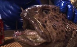 """Cá """"quái vật"""" mất đầu vẫn gặm nát được lon nước ngọt bằng nhôm: Quái thú phương nào mà """"khủng"""" quá vậy?"""