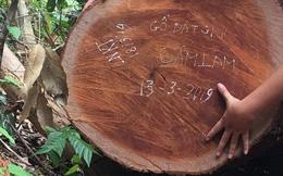 Vụ phá rừng ở VQG Phong Nha - Kẻ Bàng: Bắt, khởi tố một trạm trưởng
