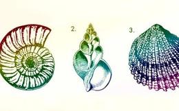 Vỏ ốc yêu thích tiết lộ khả năng tiềm ẩn và giúp cải thiện chất lượng cuộc sống tương lai của bạn