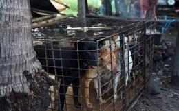 Ngành kinh doanh thịt chó ở Campuchia: Tàn bạo, đầy tội lỗi và những hệ lụy sức khỏe đáng báo động