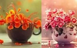 Chọn chậu hoa đẹp nhất đặt ở phòng khách, bạn sẽ tìm được bất ngờ trong tương lai, là một cuộc sống giàu sang hay cuộc hôn nhân viên mãn