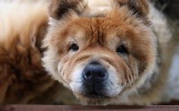 Người Hàn Quốc đổ xô mua thuốc thú y cho chó vì tin đồn chữa được ung thư
