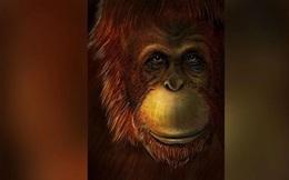 Hóa thạch tiết lộ 'King Kong' có họ hàng với đười ươi