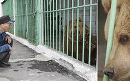 """Gấu nâu Katya - """"nữ tù nhân"""" kì lạ nhất thế giới được ân xá sau khi thụ án 15 năm tù trong một nhà giam toàn tội phạm nguy hiểm"""