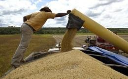 Điêu đứng vì thương chiến, nông dân Mỹ phá sản nhiều kỷ lục