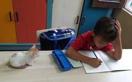 """Phát hiện học sinh lớp 1 mang mèo đến lớp, cô giáo không phạt lại có hành động bất ngờ khiến cả lớp """"vui như hội"""""""