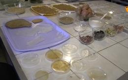 Các nhà khoa học Nga đã tạo ra bát đĩa ăn được