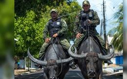 Cảnh sát Brazil gây sốt khi cưỡi trâu nước đi tuần tra