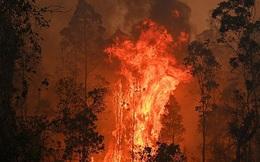 Hay tin nhà cháy, người đàn ông tức tốc vượt 200 km về dập lửa giúp bố mẹ nhưng khi quay lại thì bất ngờ bị đuổi việc