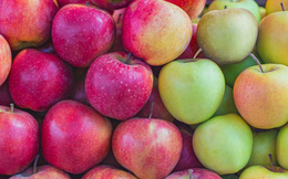 100 năm lời nguyền táo đỏ: Con người đã ép những quả táo phải đỏ, ngày càng phải đỏ