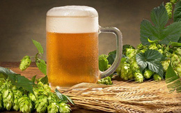 """Phát hiện """"thần dược"""" đẩy lùi cao huyết áp, tiểu đường trong... bia"""