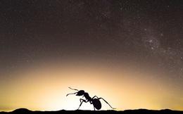 Cảnh báo giật mình: Ô nhiễm ánh sáng khiến côn trùng tuyệt chủng