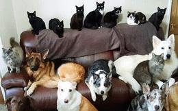 Bà chị sở hữu siêu năng lực: Bắt 17 chú chó, mèo nhà mình ngồi im một chỗ với nhau để chụp ảnh