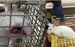 Phơi bày sự tàn bạo trong các nông trại khai thác lông động vật ở Nga: Thỏ, sóc bị giết hại để phục vụ cho những món đồ thời trang